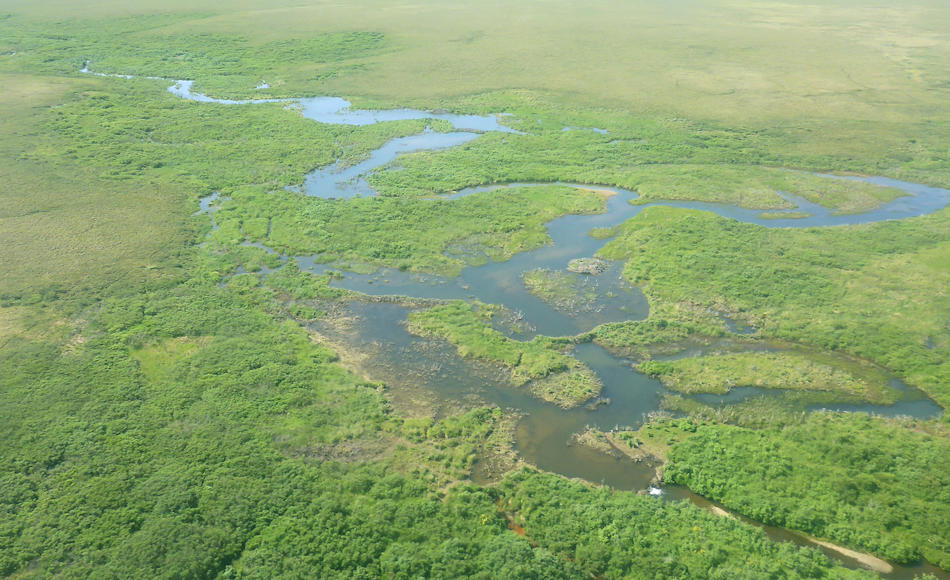 Biberaktivität auf der Seward-Halbinsel in Alaska. Die Tiere haben einen arktischen Tundrastrom (oben) in ein Feuchtgebiet (Mitte) verwandelt. Gut zu sehen sind mehrere Dämme und eine Biberburg. Bild: Christopher Arp / University of Alaska